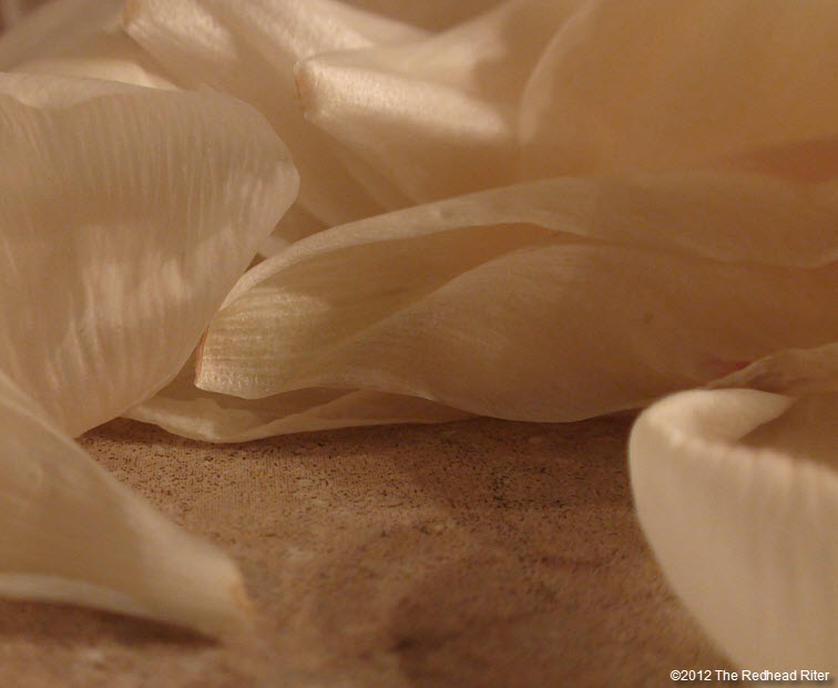 white dying flower petals like dying dreams