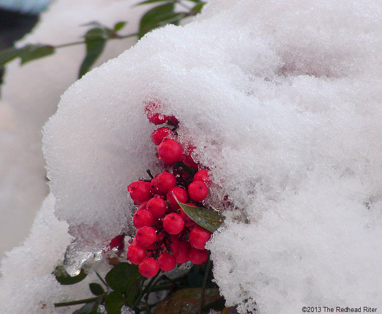 snow ice on red berries