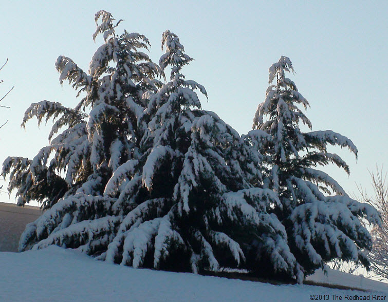 snow trees the morning after