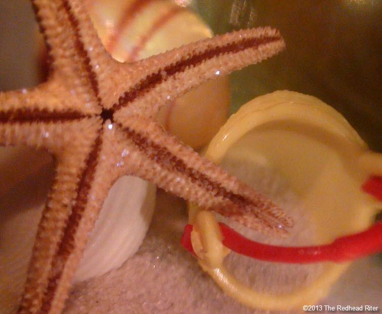 starfish shells sand beach sunshine