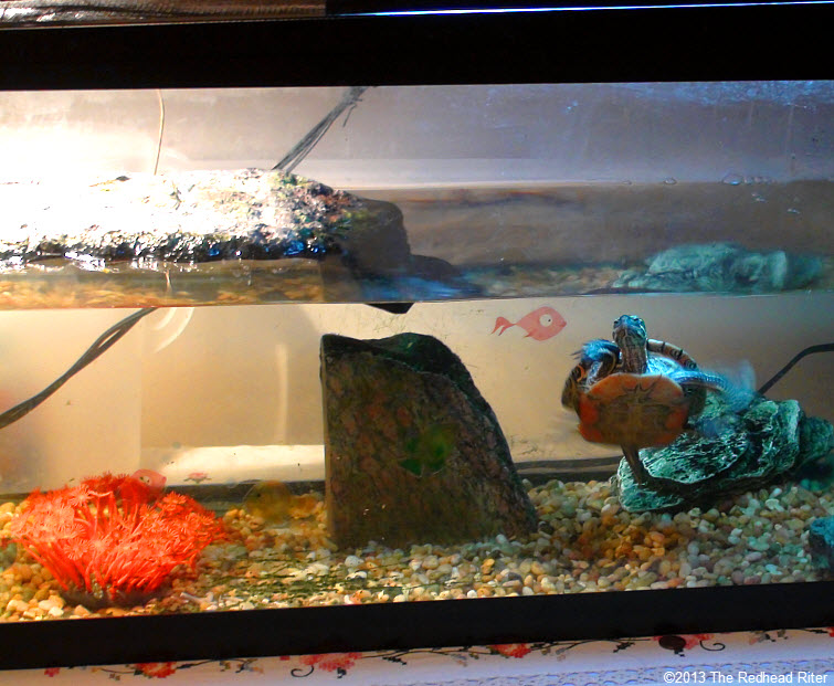 painted turtle 55 gallon tank