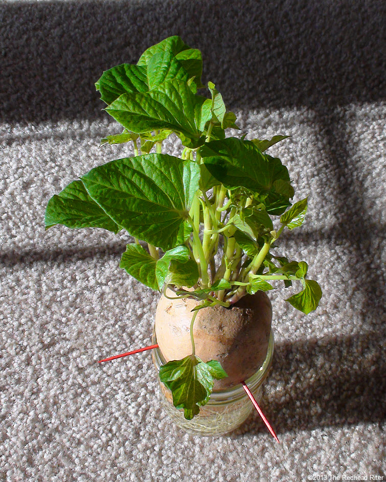 Mr Potato Head Sweet Potato