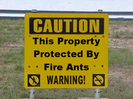 Texas caution fire ants