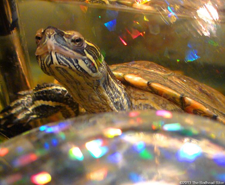 Turtle Western Painted Turtle 2