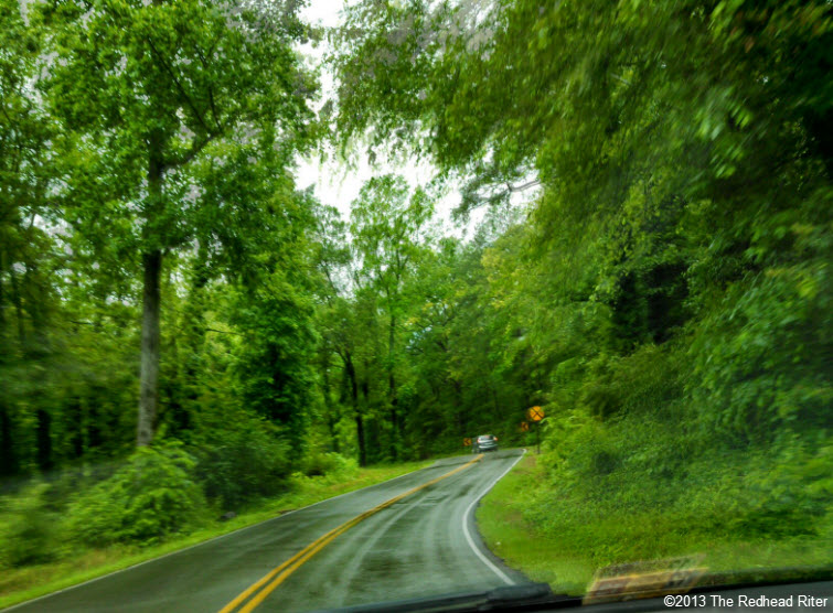 after rain road green trees