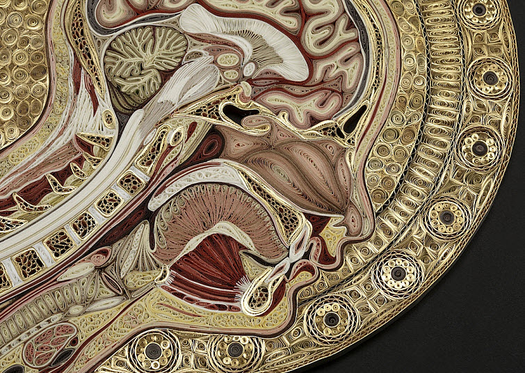 A detail of Angelico showing the pink-ish thyroid gland in the front of the throat and the arbor vitae