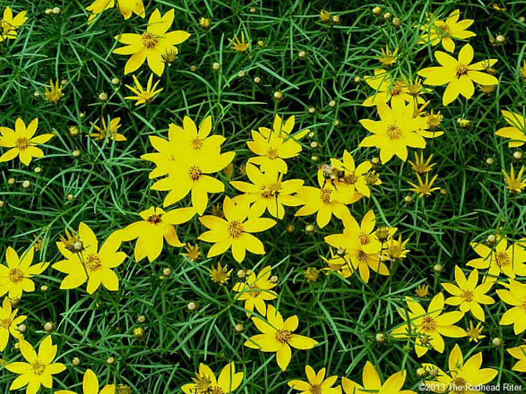 small yellow flower bush, life takes time