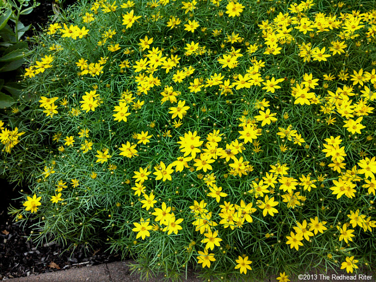 small yellow flowers on bush, life takes time