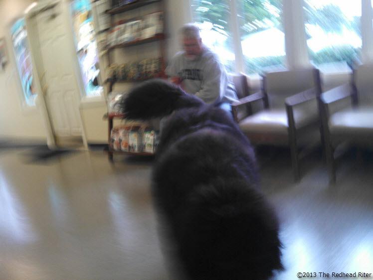 big black dog heading for us