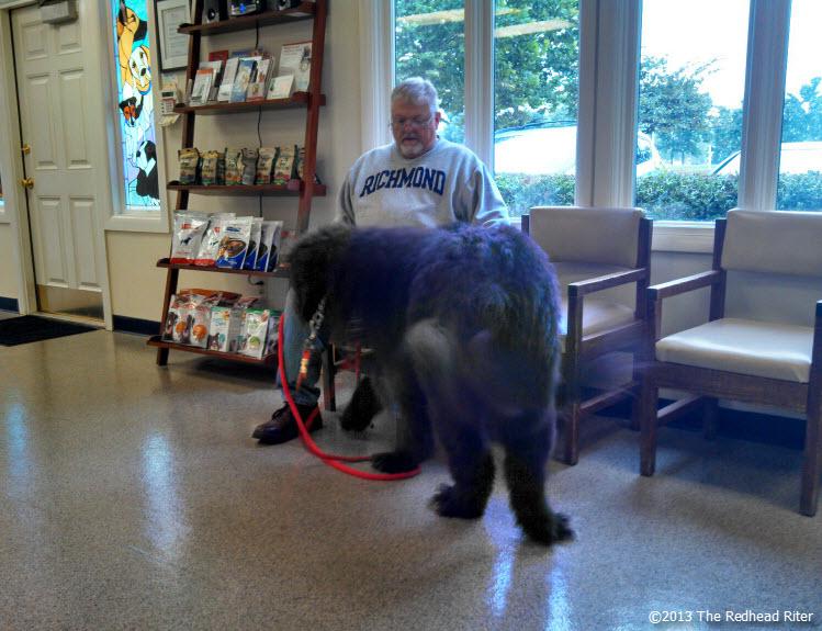 big black dog retreating
