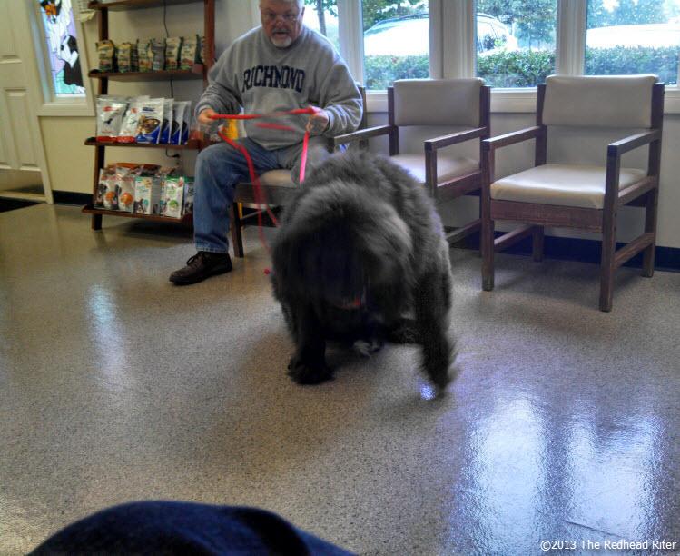 big black dog veterinarian office