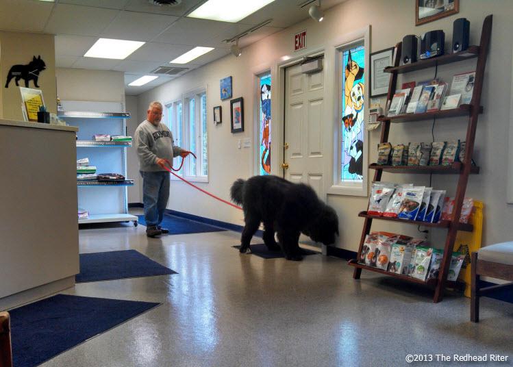 big black furry dog