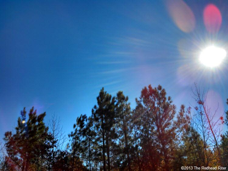 pine trees blue sky sunshine 4