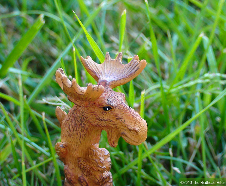 brown moose in grass