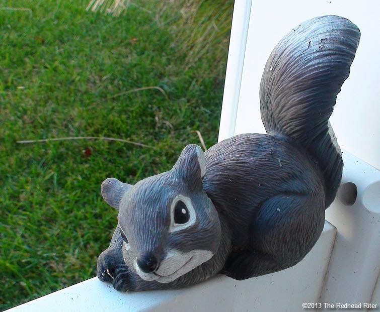 gray white squirrel