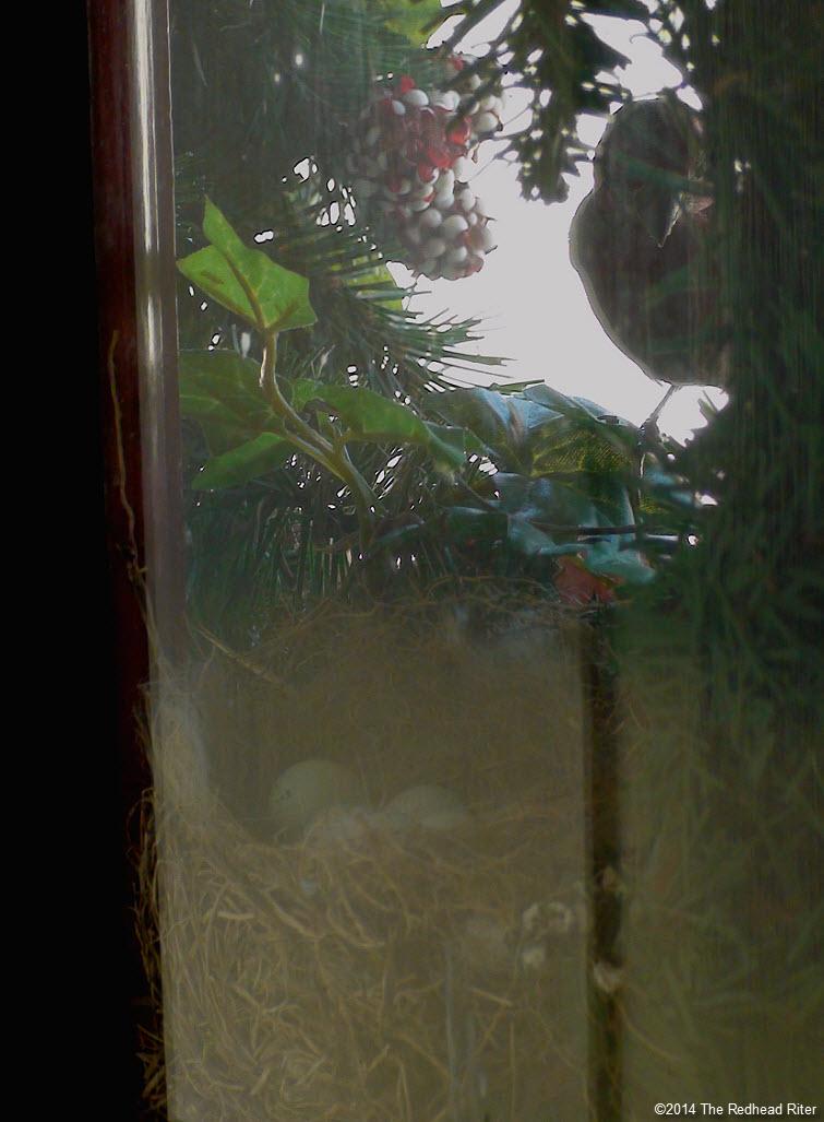 bird and bird eggs in nest in wreath Survival Success