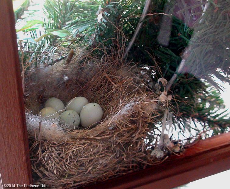 bird eggs in nest in wreath on front door Survival Success
