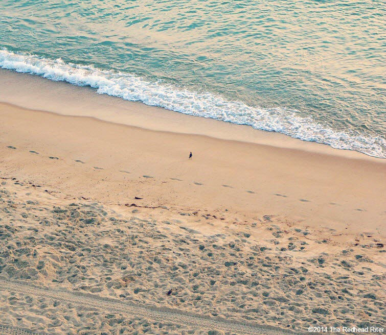 bird on beach ocean waves footprints