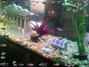 The Neon Fish